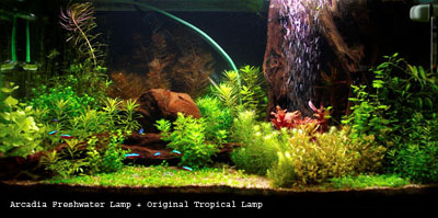 25_Freshwater+Tropical