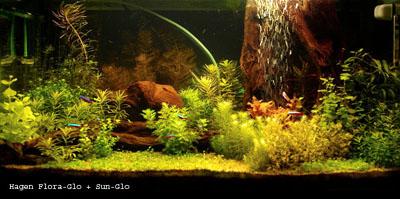 Fabrication d'un aquarium de 600L en plywood. 28_FloraGlo+SunGlo
